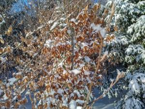 2017-01-06 13-06-47 SALMENDINGEN KORNBÜHL Schneeschuhwandern