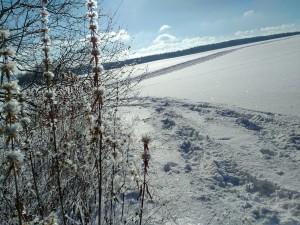 2017-01-06 13-24-56 SALMENDINGEN KORNBÜHL Schneeschuhwandern